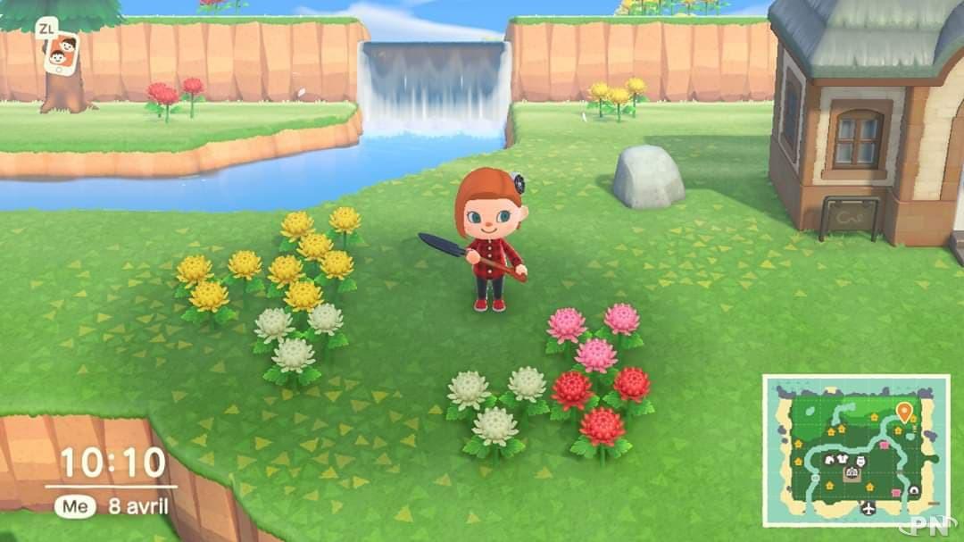 Guide fleurs hybrides Animal Crossing : tous nos conseils