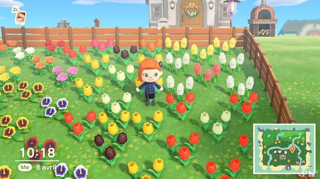 Conseil plantes hybrides Animal Crossing New Horizons