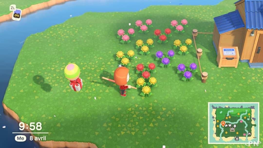 Des hybrides de chrystanthèmes dans Animal Crossing: New Horizons
