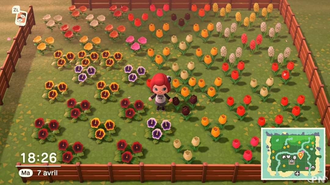 Comment faire pousser des fleurs hybrides dans Animal Crossing: New Horizons ?
