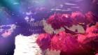 Screenshots de Oninaki sur Switch