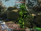 Screenshots de The Elder Scrolls: Blades sur Switch