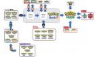 Infographie de Pokémon Epée & Bouclier sur Switch