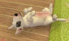 Screenshots de Nintendogs + Cats sur 3DS