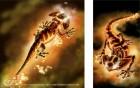 Artworks de Harry Potter et la Coupe de Feu sur NGC