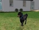 Screenshots de Les Sims 2 Animaux & Cie sur NGC