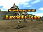 Screenshots de Animal Kingdom : Wildlife Expedition sur Wii