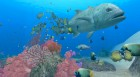 Screenshots de Endless Ocean 2 : Aventuriers des Fonds Marins sur Wii